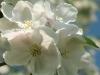 Prachtvolle Blüten