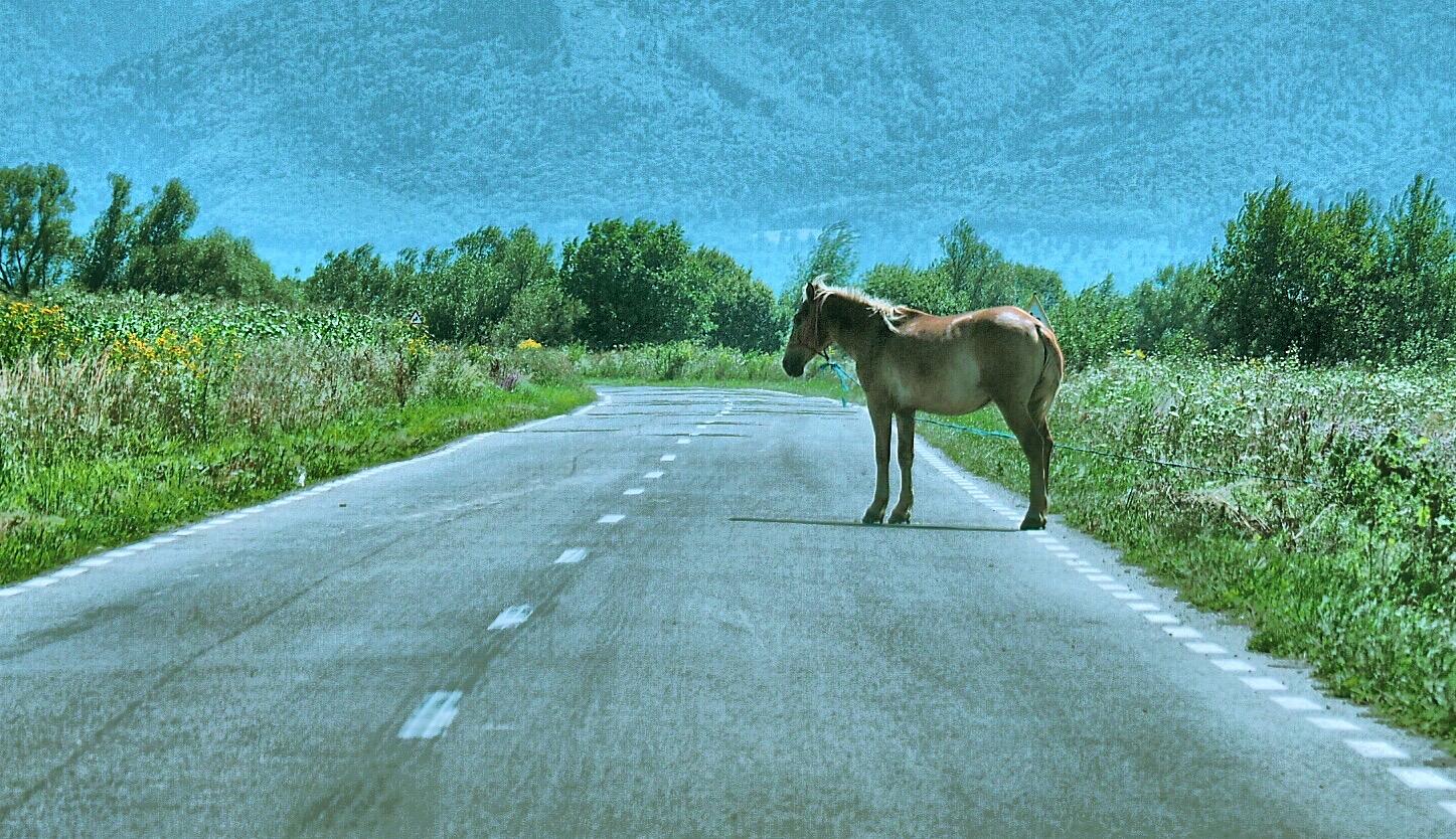 Ein Pferd auf der Strasse
