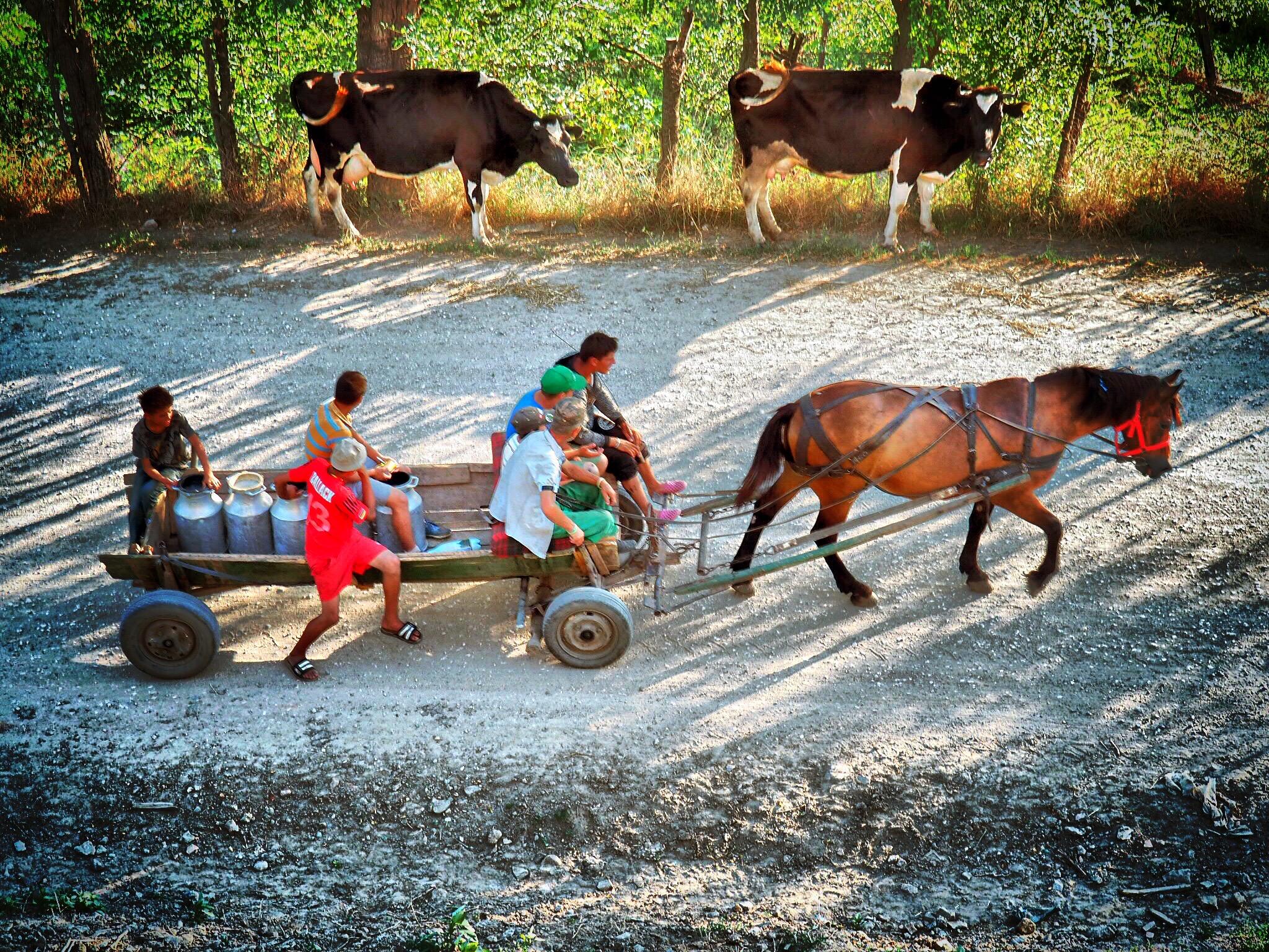 Pferdefuhrwerke sind auf dem Land häufig anzutreffen