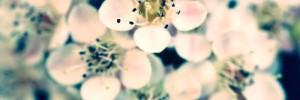 Makrofoto: Blütendolde