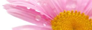 Ein bisschen Überbelichtung und schon wirkt diese rosa Blüte vor dem Himmel wie freigestellt!