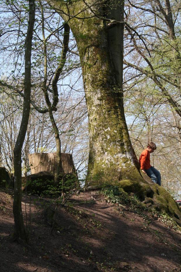 Foto Mein Sohn im Wald